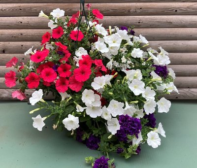 Star Spangled Hanger combo Hanging Basket (c13)